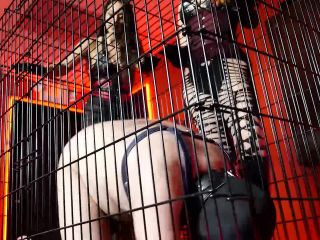 Stella Liberty – Crate Training 101, Break the Beast – Goddess Lilith – Human Pet – Submissive Training, Puppy Play | pet play | femdom porn holly halston femdom