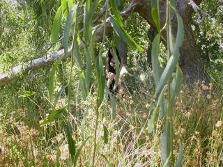 Young Goddess Kim - Forest Fatale   dirty talk   cumshot