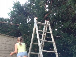 Move Up The Garden Ladder!